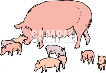350x241 Royalty Free Clip Art Image Mother Pig With Her Babies