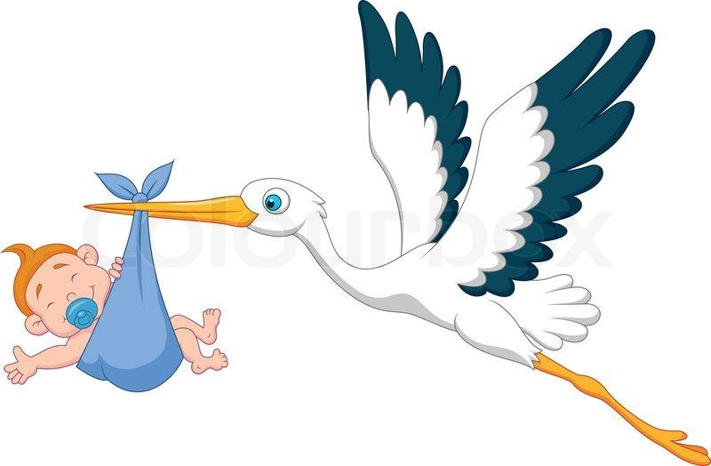 800x524 Vector Illustration Of Stork With Baby Boy Cartoon Stock Vector