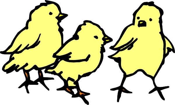 600x359 Baby Chicks Clip Art