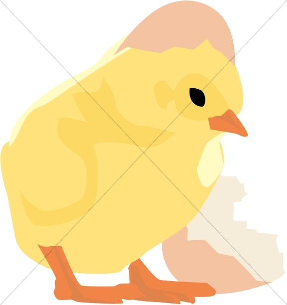 577x612 Baby Chick And Cracked Egg Easter Egg Clipart