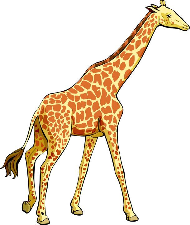 610x720 Giraffe Clipart Kostenlos