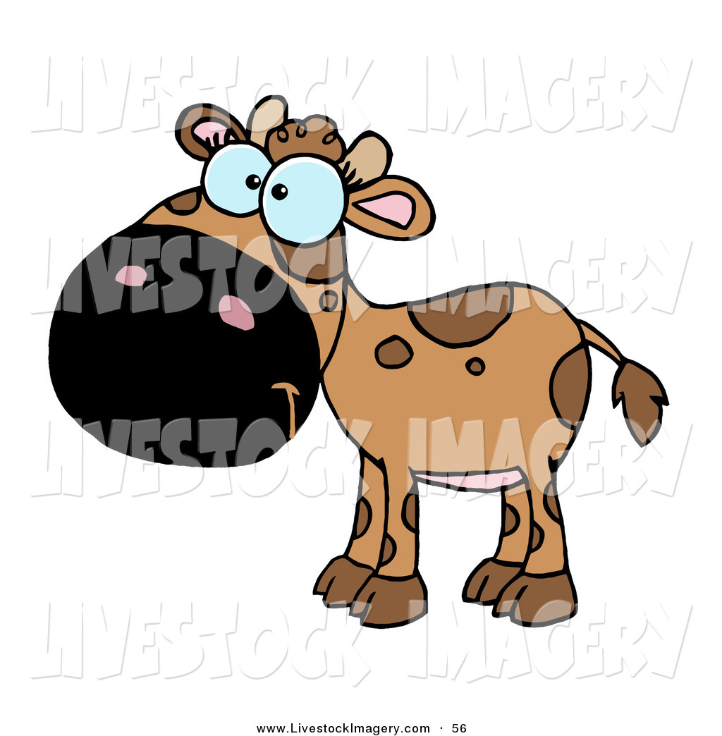 1024x1044 Royalty Free Calf Stock Livestock Designs