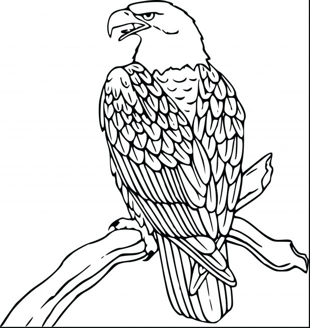 618x655 Coloring Various Eagle Color Page. Baby Eagle Coloring Page