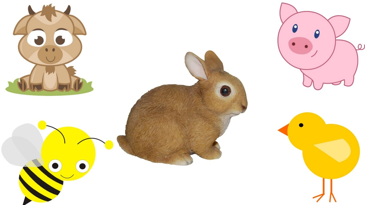 1280x720 Baby Farm Animals Names And Sounds Learn Domestic Baby Animals