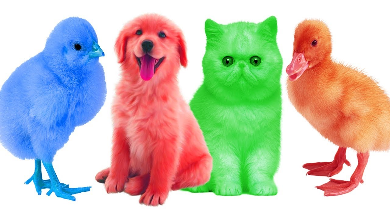 1280x720 Cute Farm Animals Colorful Learning Color Video For Kids