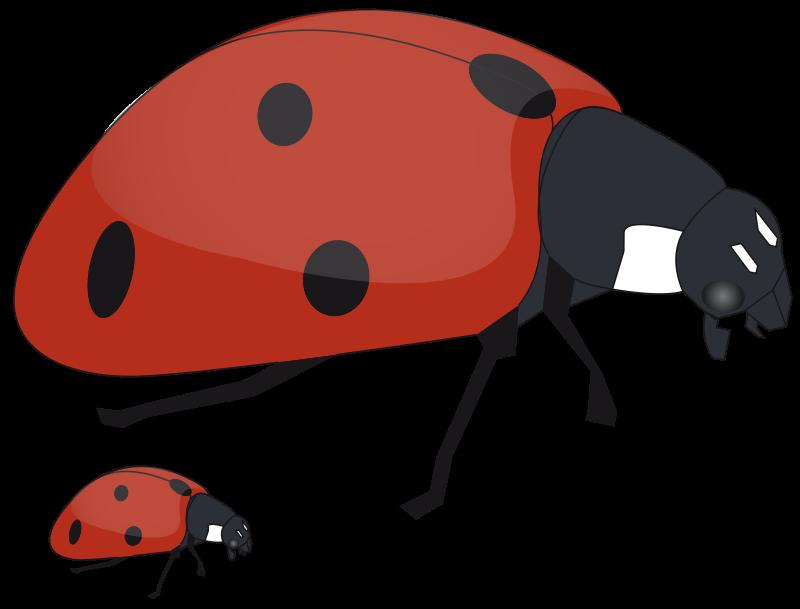 800x609 Free Mommy Ladybug And Baby Ladybug Clip Art