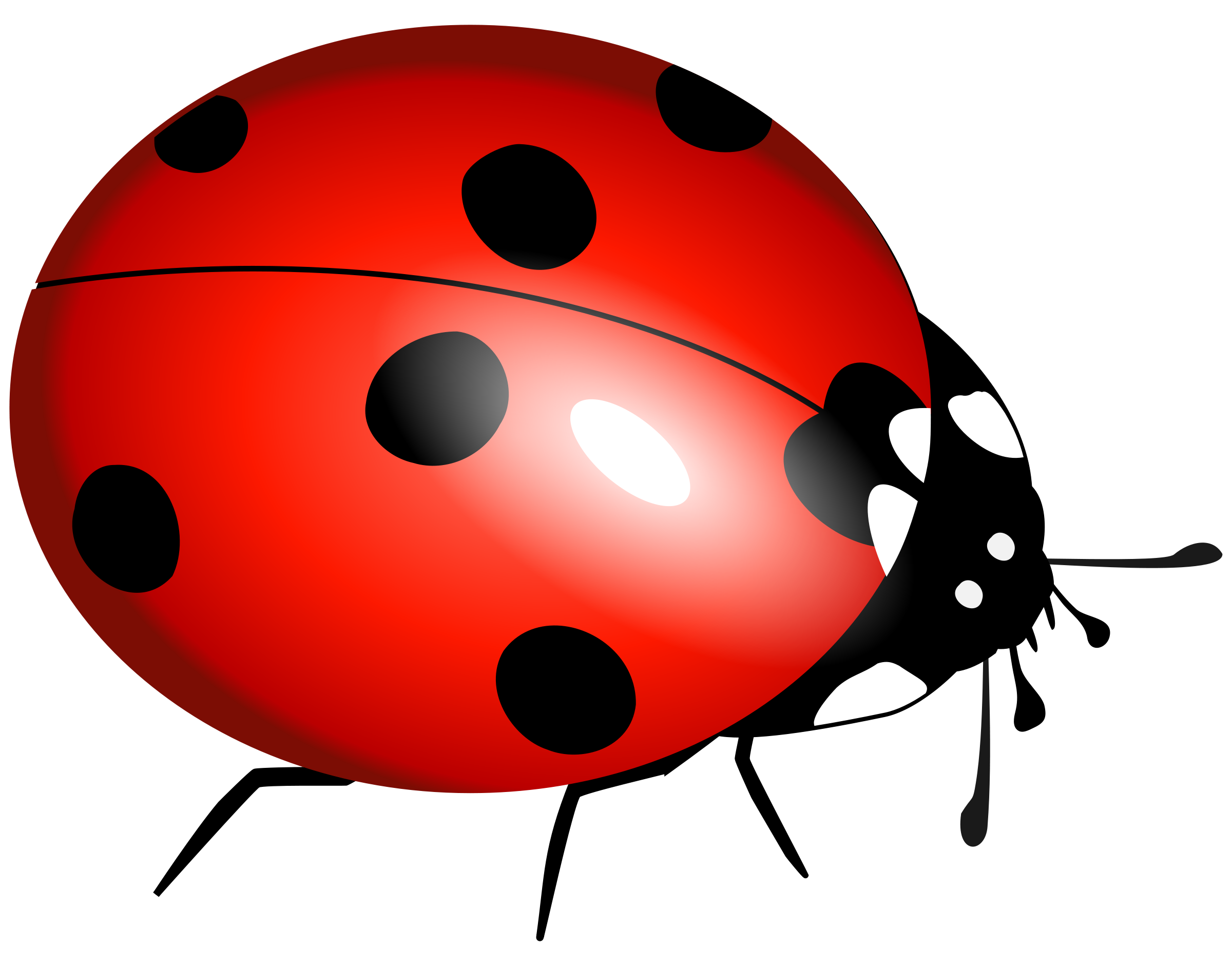 2400x1882 Ladybug Download Lady Bug Clipart Clipartmonk Free Clip Art Images