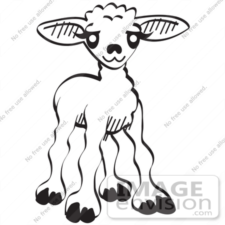 450x450 Royalty Free Cartoon Clip Art Of A Little Baby Lamb, Black