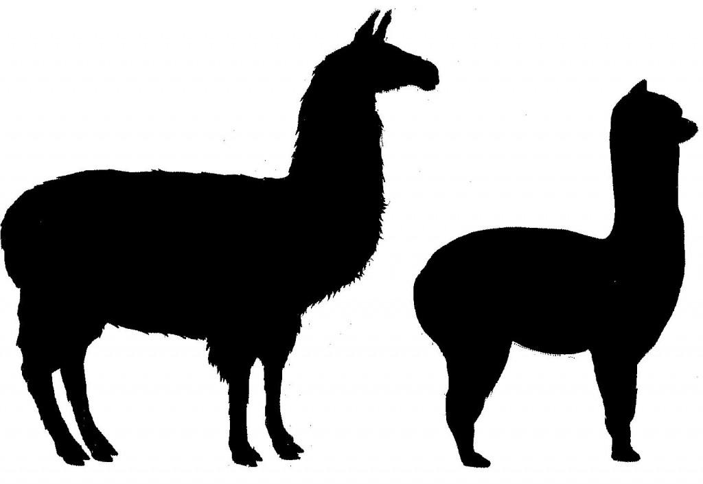 1024x705 Alpaca Clipart Baby Llama