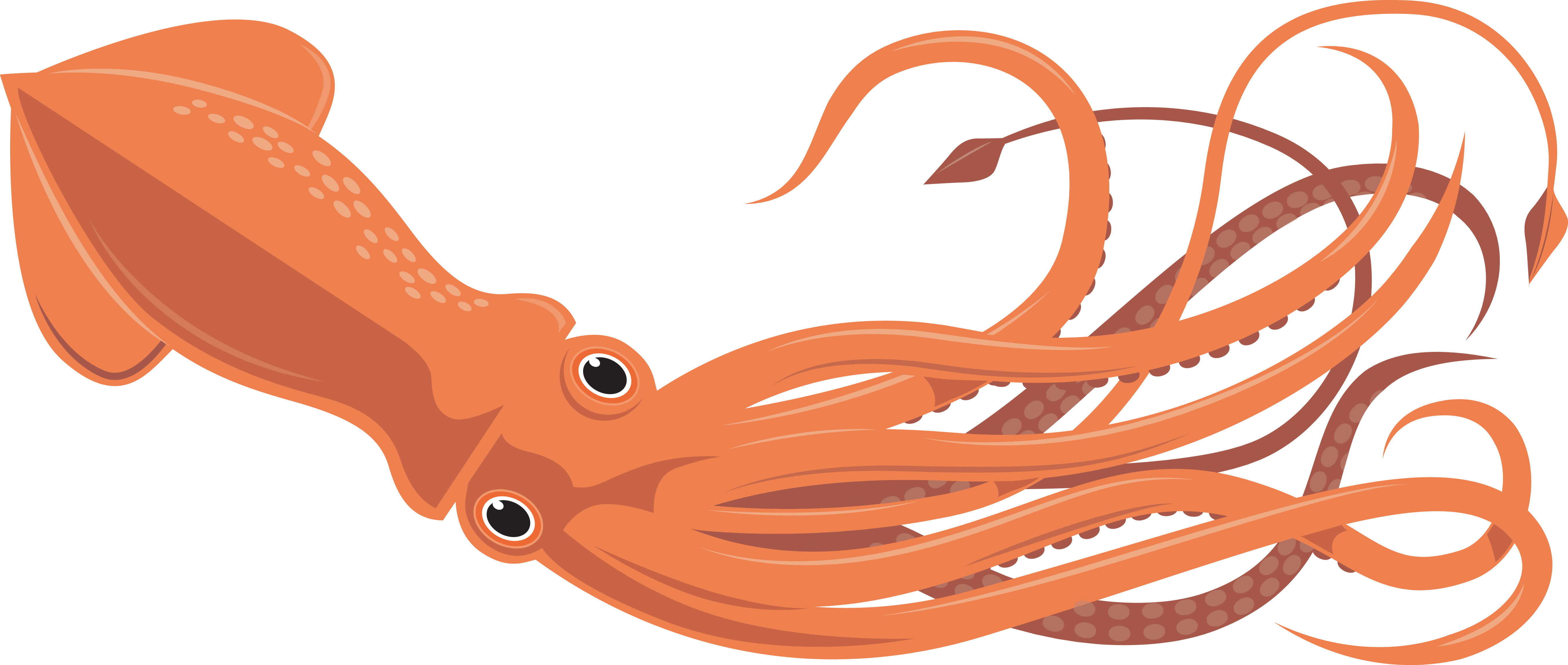 5401x2292 Realistic Clipart Octopus