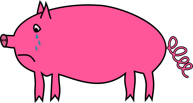 800x428 Baby Pig Clipart