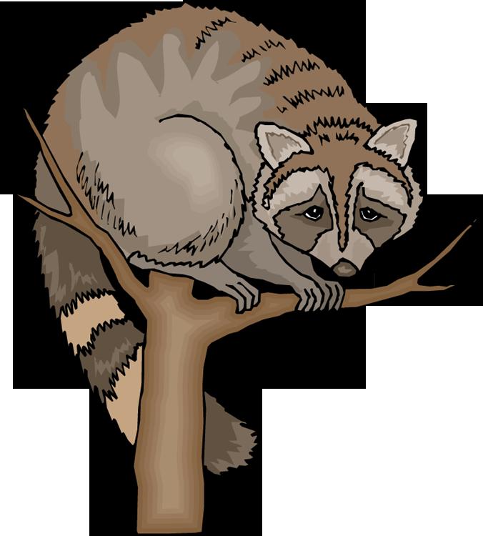 676x750 Baby Raccoon Clipart