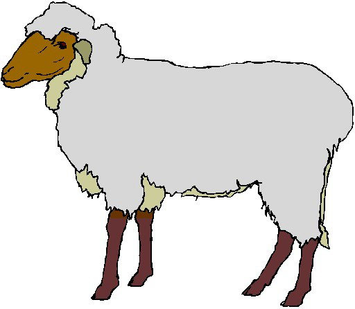512x446 Clipart Of Lambs And Sheep