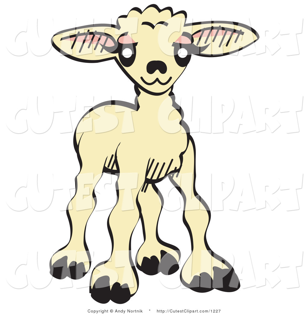 1024x1044 Royalty Free Sheep Stock Cute Designs