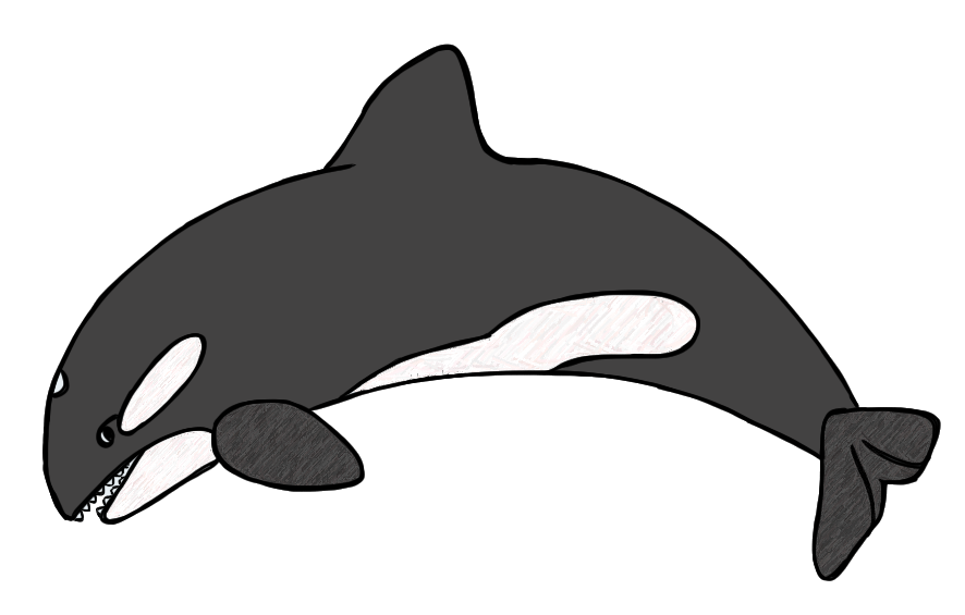 886x565 Baby Whale Clip Art Free Clipart Images 2