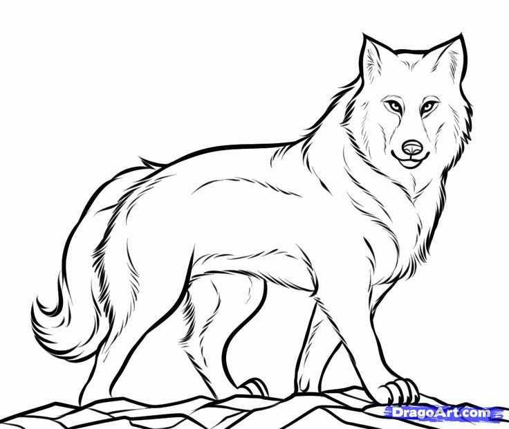 Baby Wolf Clipart | Free download on ClipArtMag