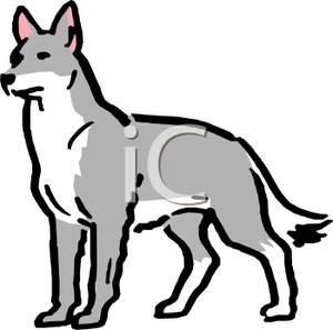 300x297 Top 93 Gray Wolf Clip Art