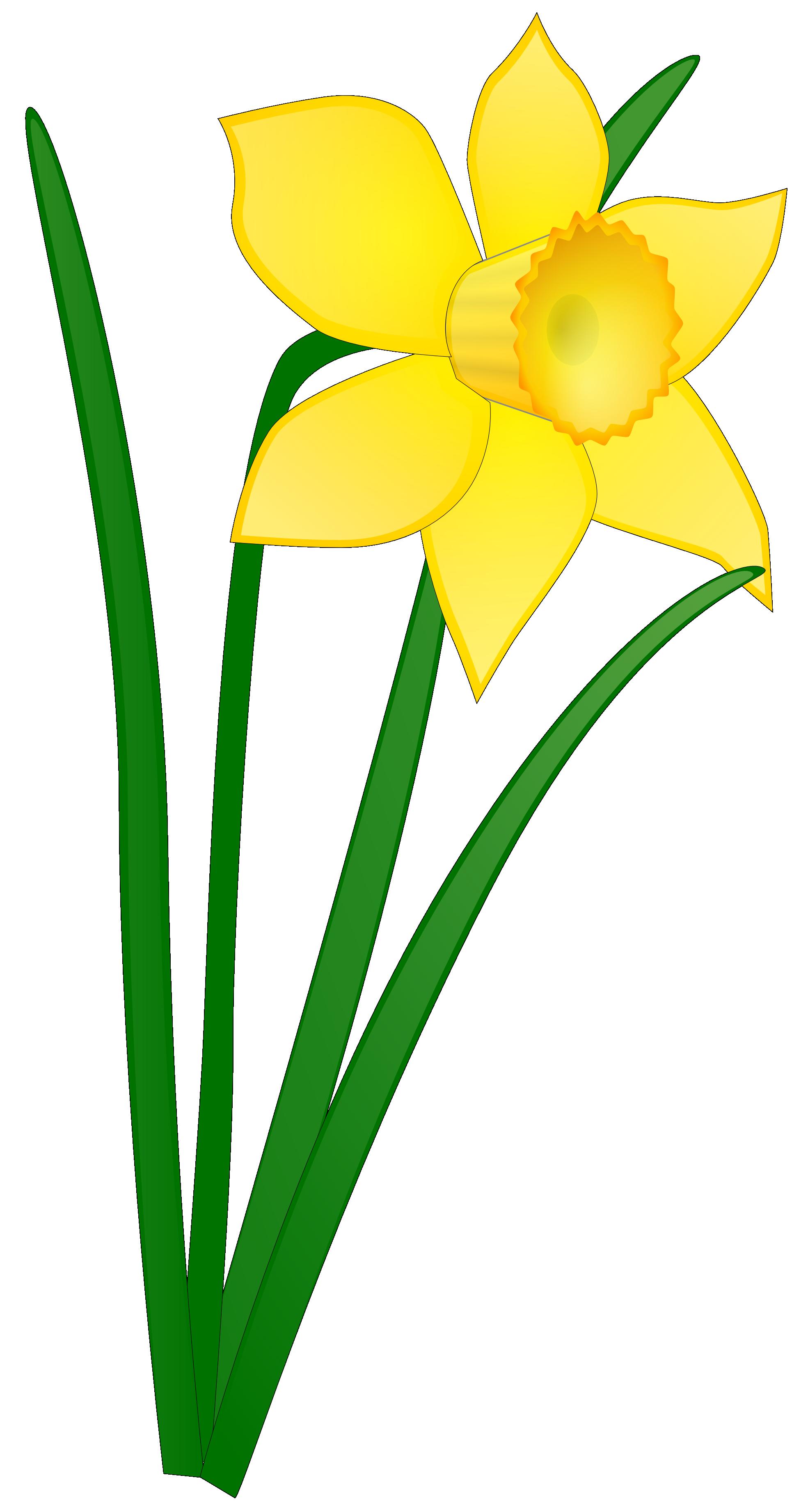 1969x3684 Flower Clipart No Background