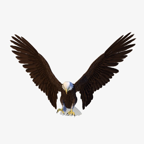 600x600 Eagle, Eagle Material, Material Png Image For Free Download