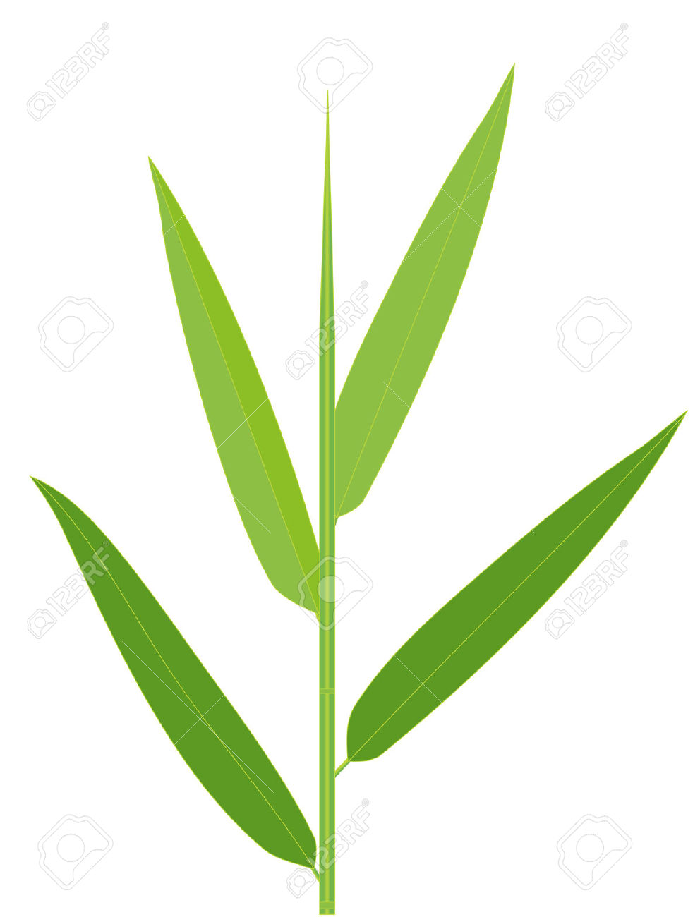 992x1300 Vector Illustration Of Bamboo Leaves Isolated On White Royalty