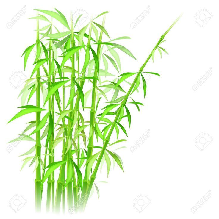 Bamboo Png