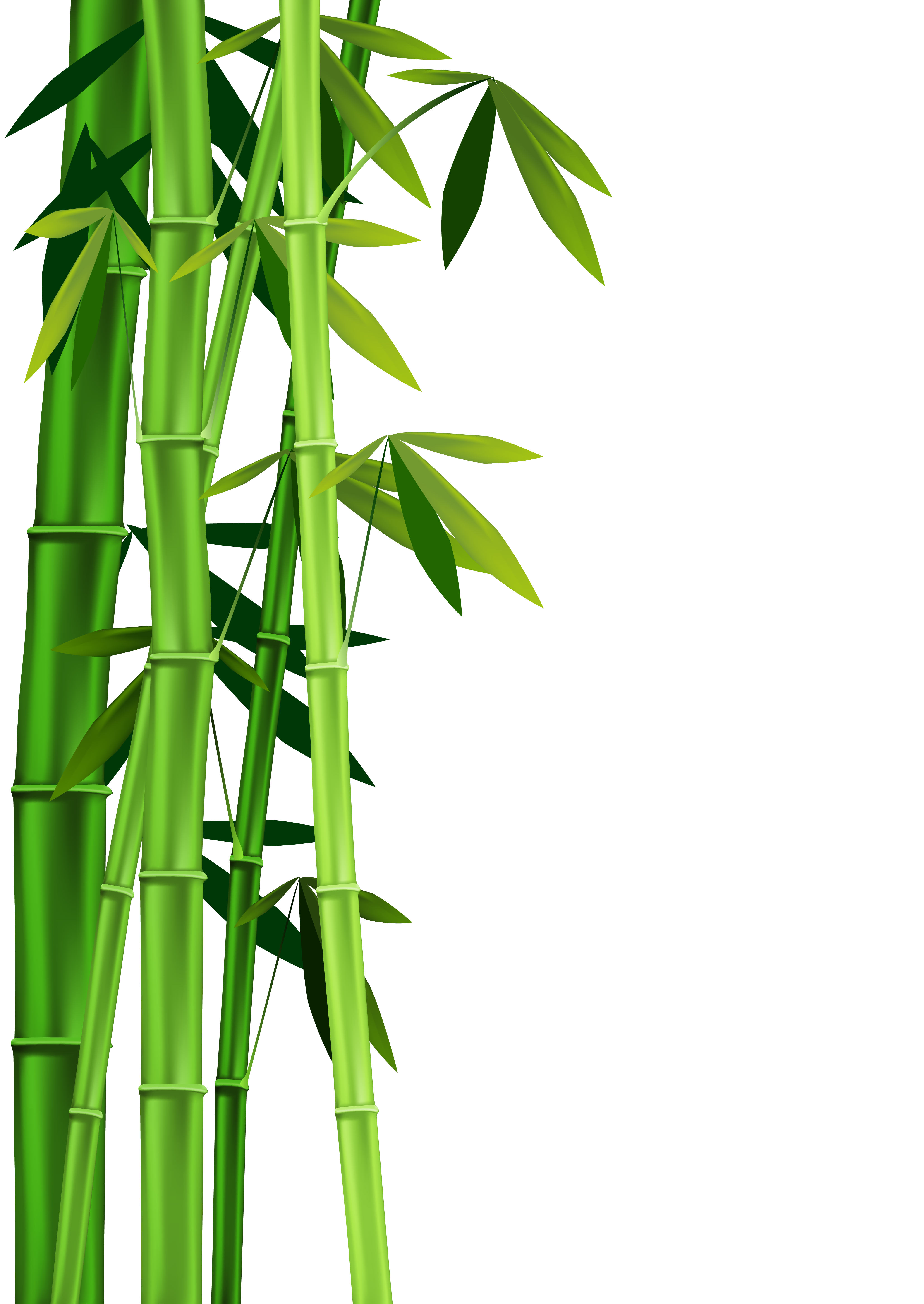 4082x5756 Bamboo Border Free Download Clipart 3