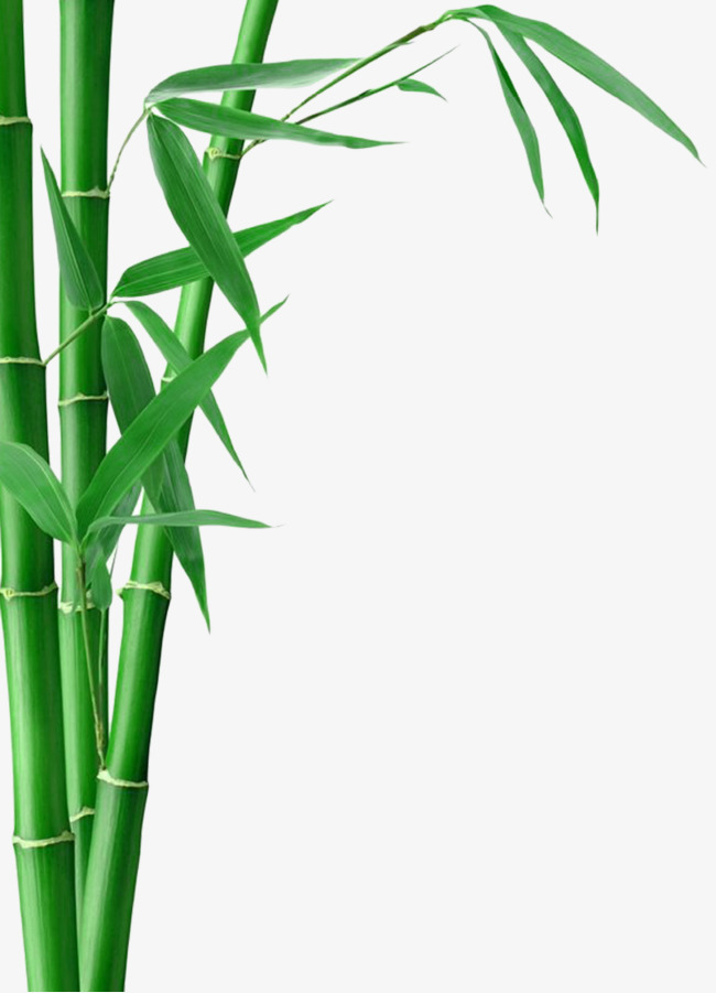 650x901 Bamboo Bamboo, Bamboo, Bamboo Leaves, Green Png Image For Free