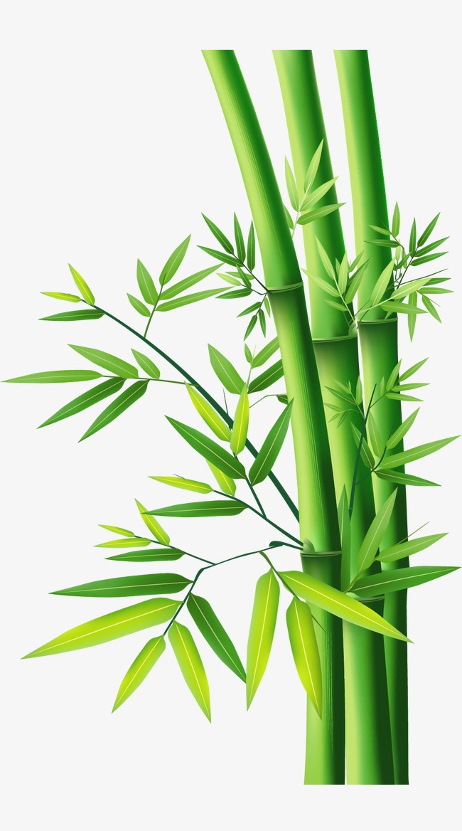 650x1168 Bamboo Bamboo, Bamboo, Bamboo Leaves, Leaves Png And Vector