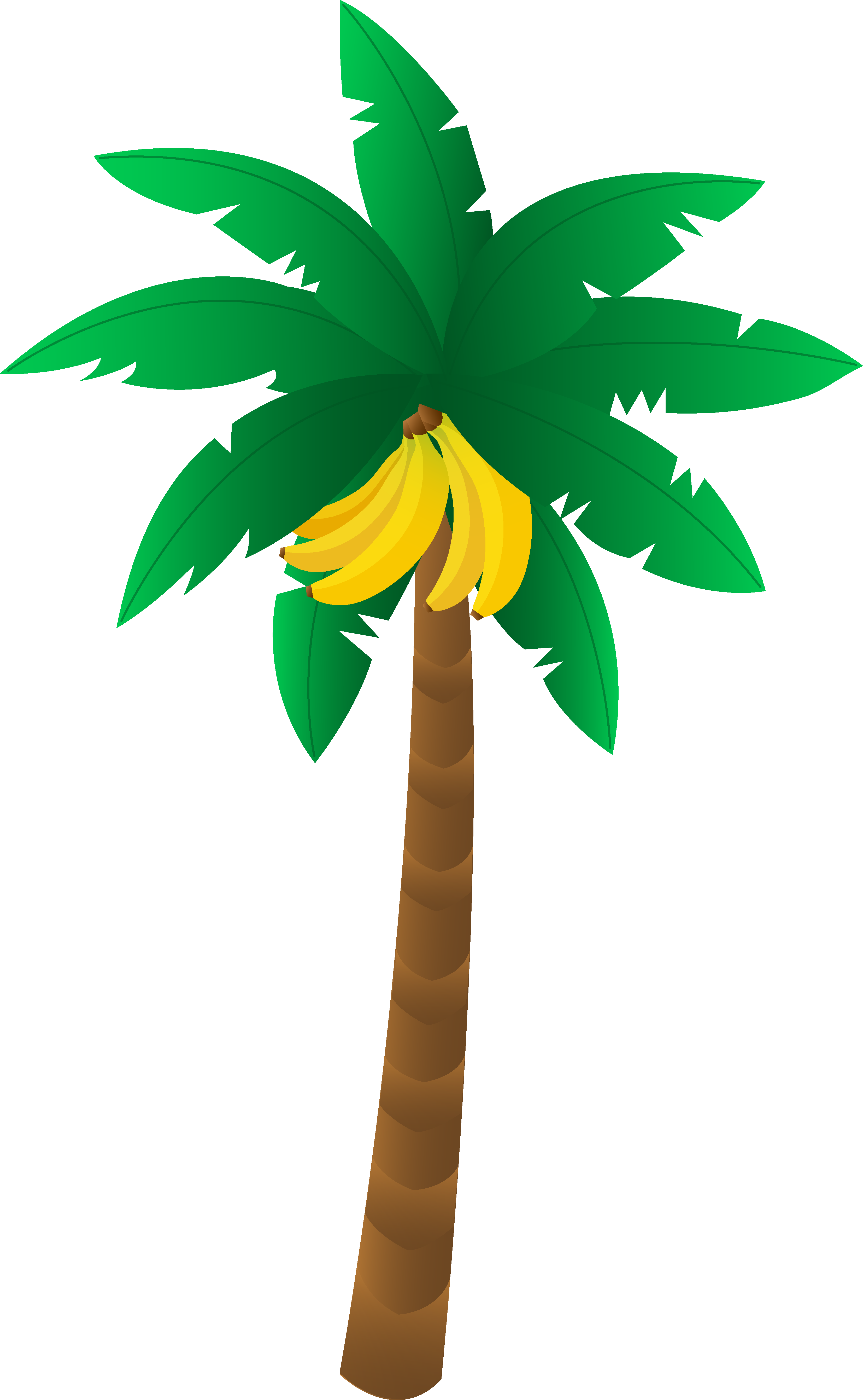 3305x5359 Tropical Banana Tree