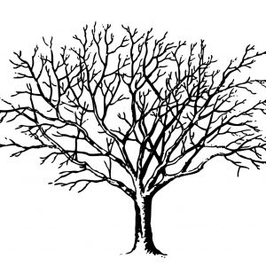 300x300 Adult Picture Of A Bare Tree Printable Picture Of A Bare Tree