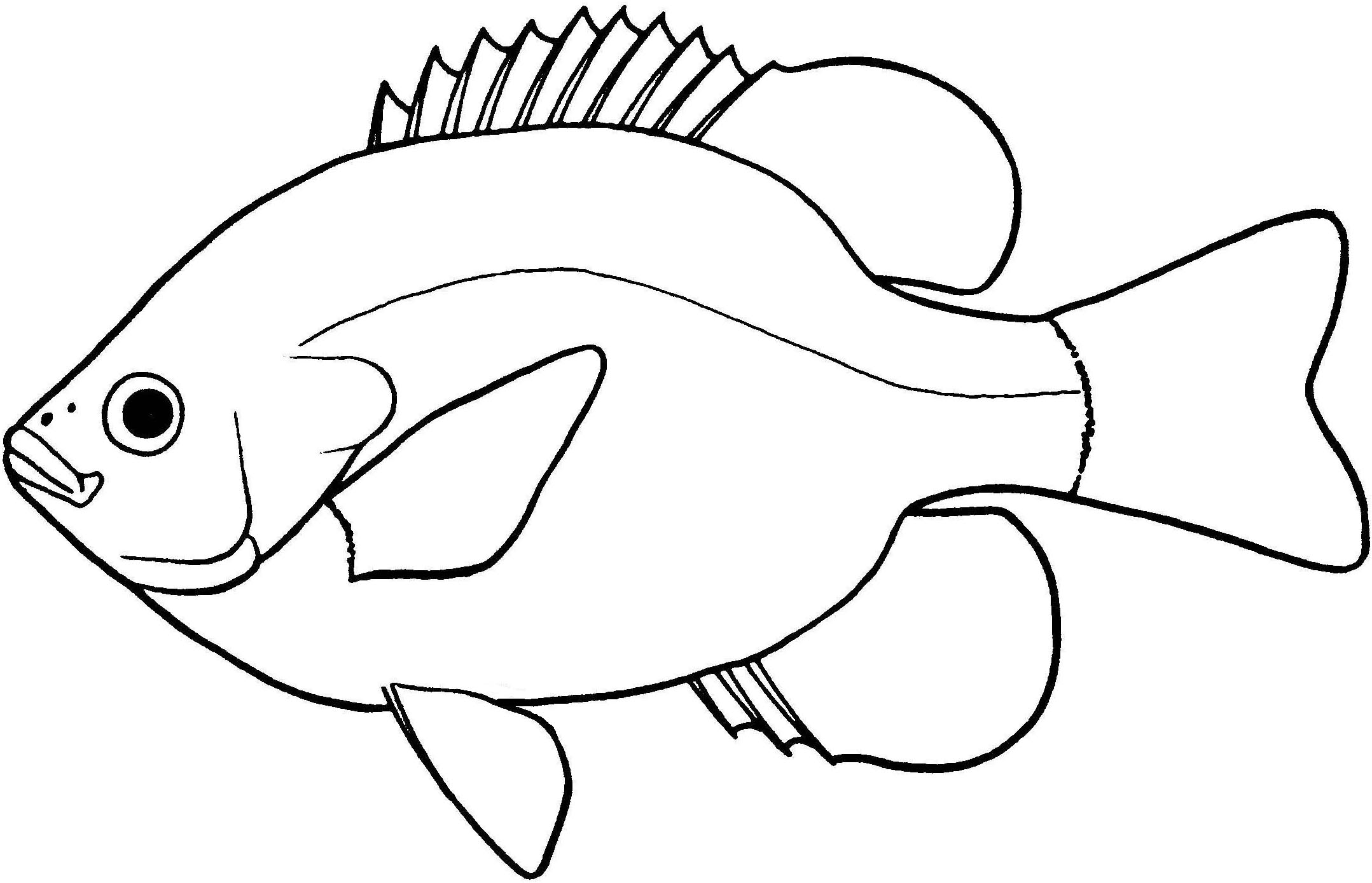 Fish outline drawing. Bass free download best