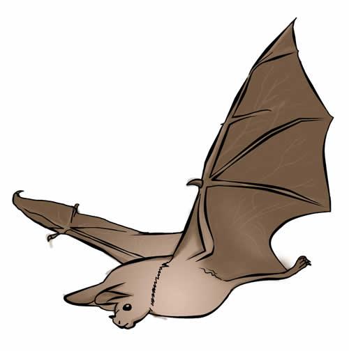 500x504 Bat Clip Art