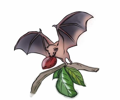 500x415 Top 76 Bat Clipart