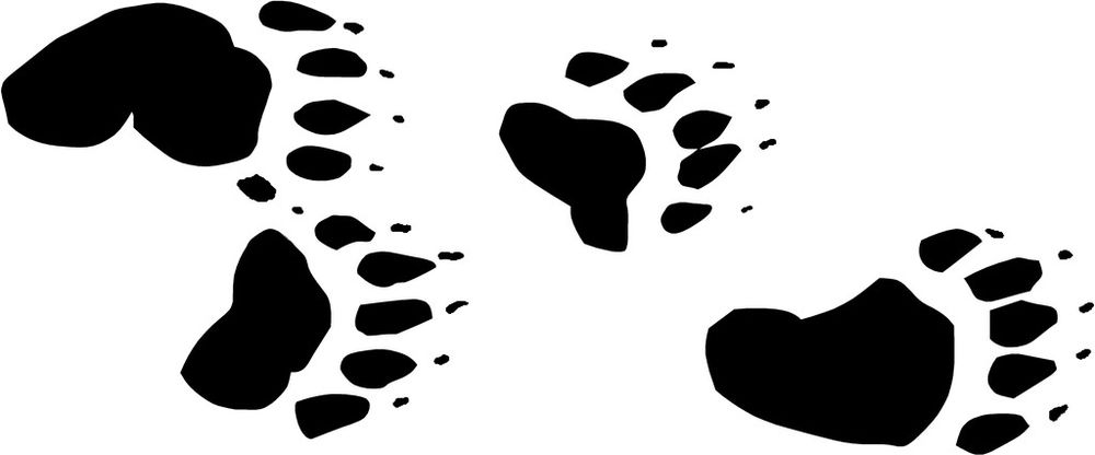 1000x416 Grizzly Clipart Bear Tracks