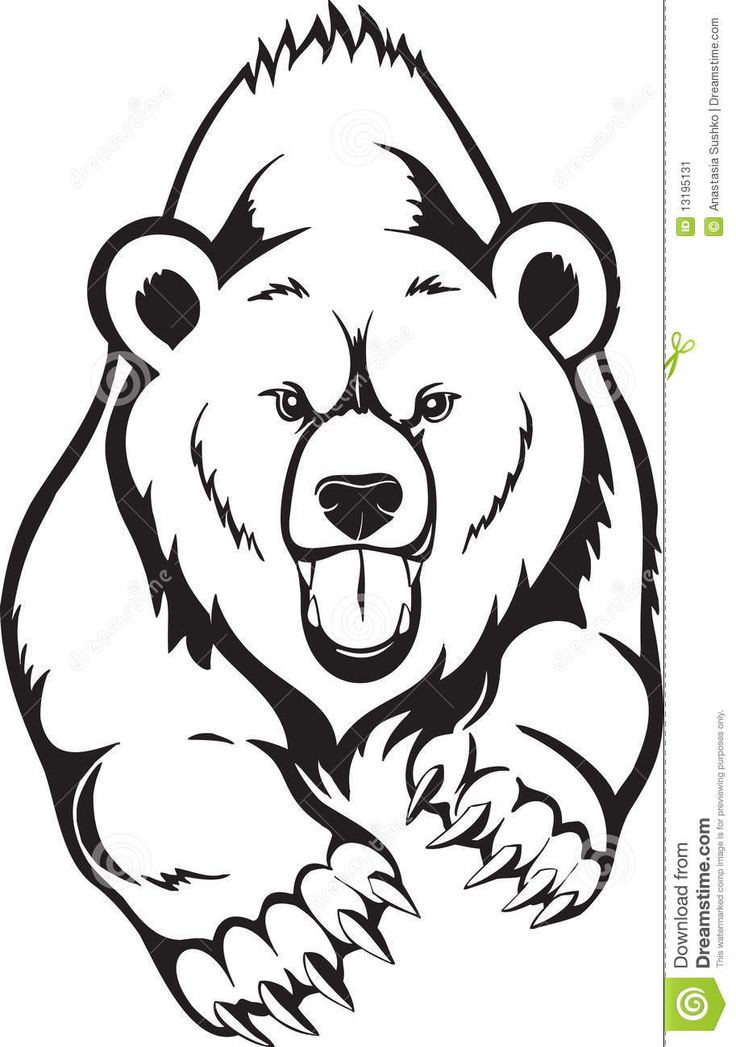736x1047 Grizzly Bear Clipart Line Drawing