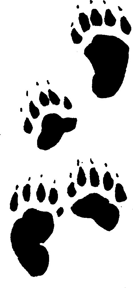 466x1010 Bear Footprint Clipart