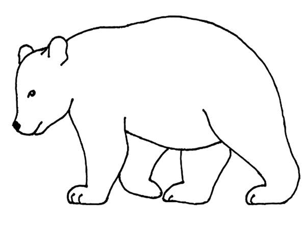 600x446 Bear Outline Picture Coloring Page