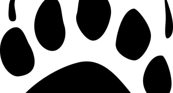 728x393 Bear Paw Prints Tattoo Bear Paw Prints Tattoo Sample Fresh 2017