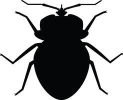 246x200 Black And White Bug Clip Art Cliparts