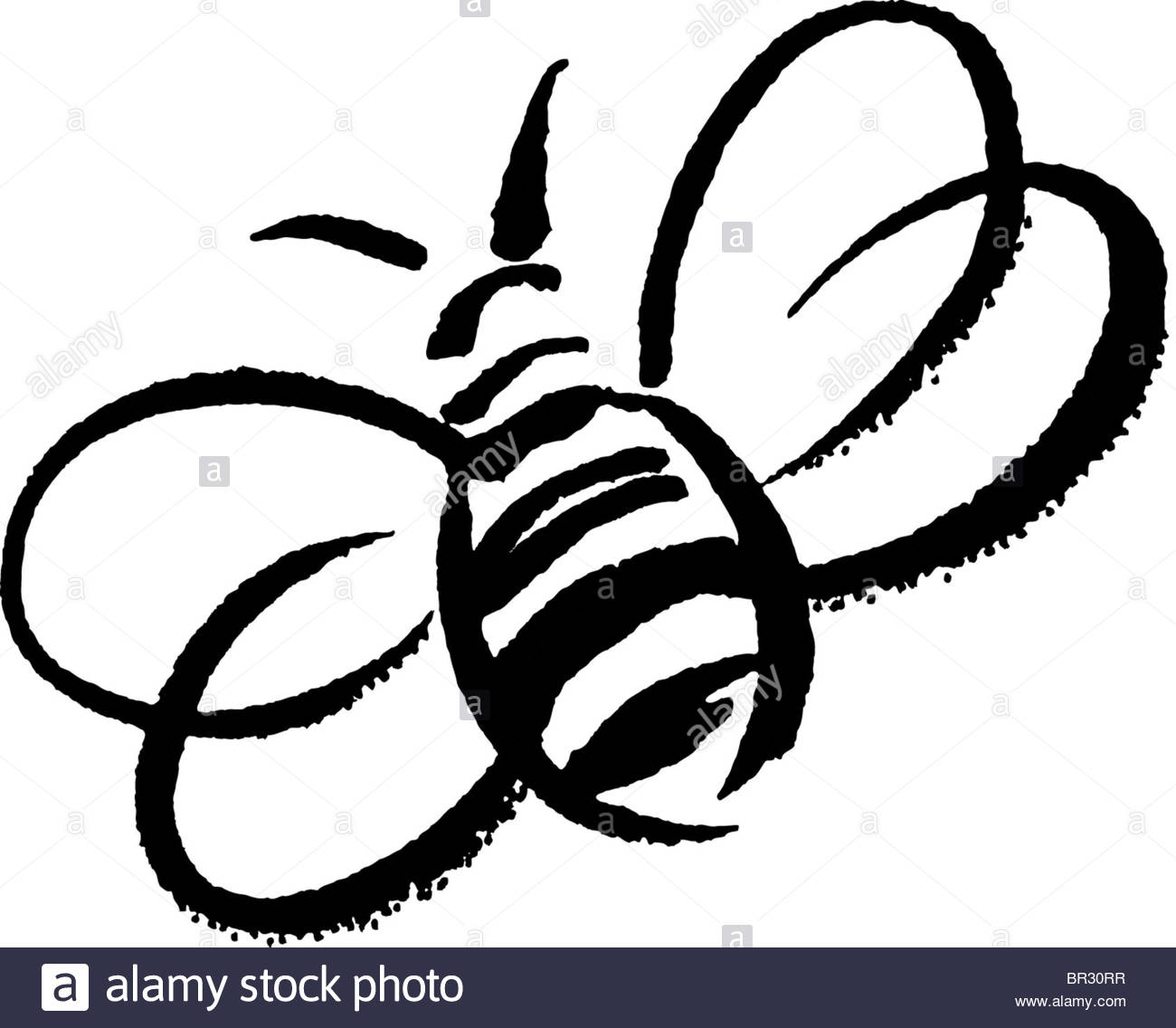 Bee Black And White Clipart