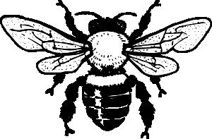 300x197 Honey Bee Clip Art