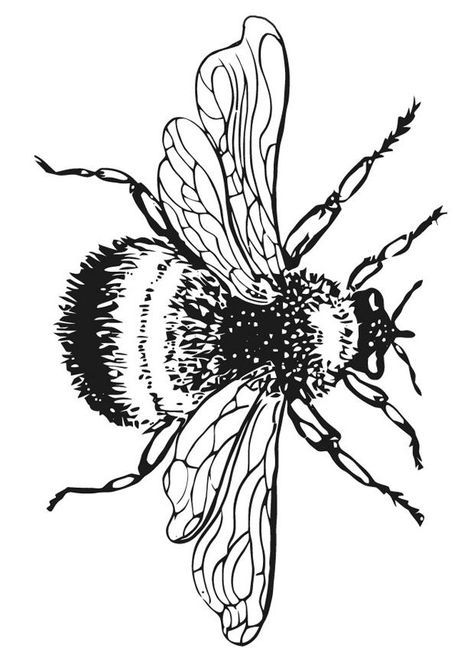 474x668 28 Best Bees Images Painting, Draw And Drawing