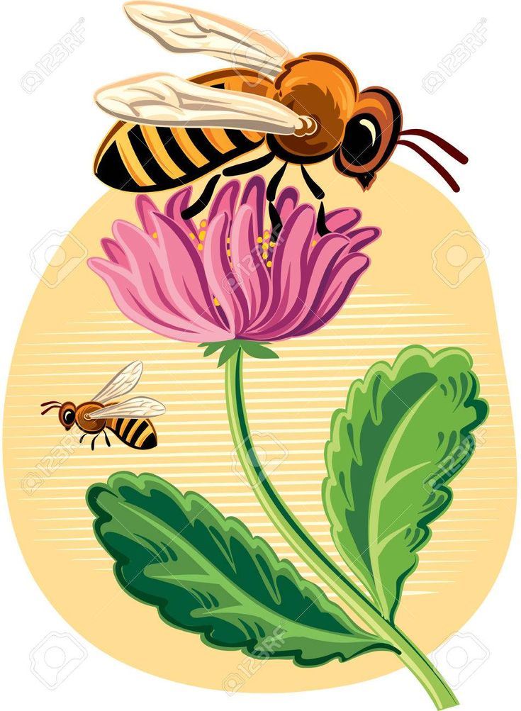 735x1003 The Best Bee Clipart Ideas Cute Bee, Vector