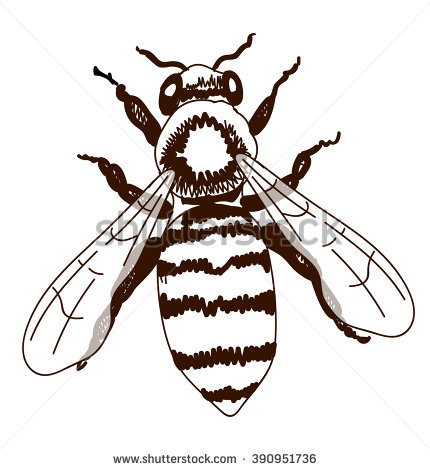 430x470 Drawn Bees Outline