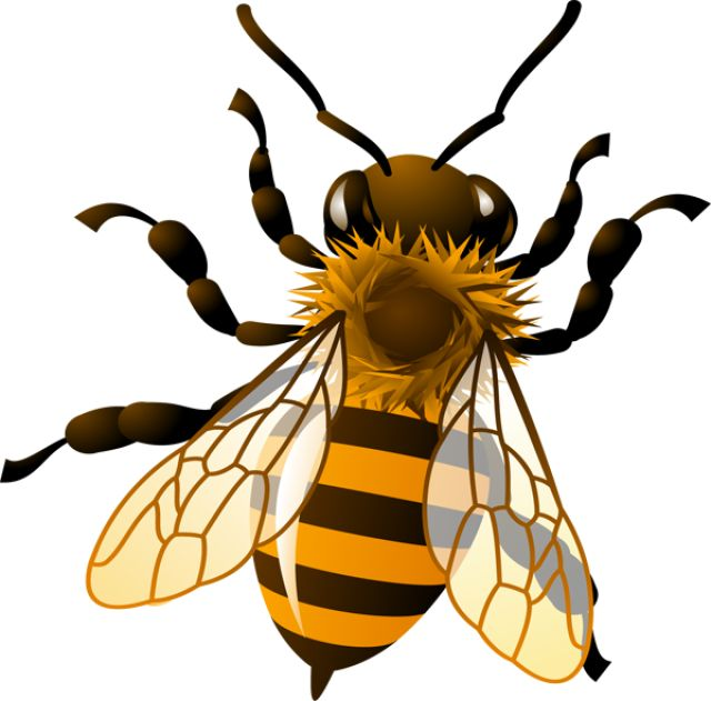 640x631 Bee Clipart Kid
