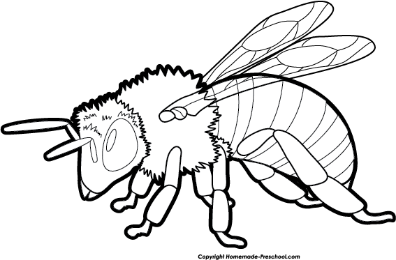 567x373 Bee Black And White Bee Clipart Black And White 4