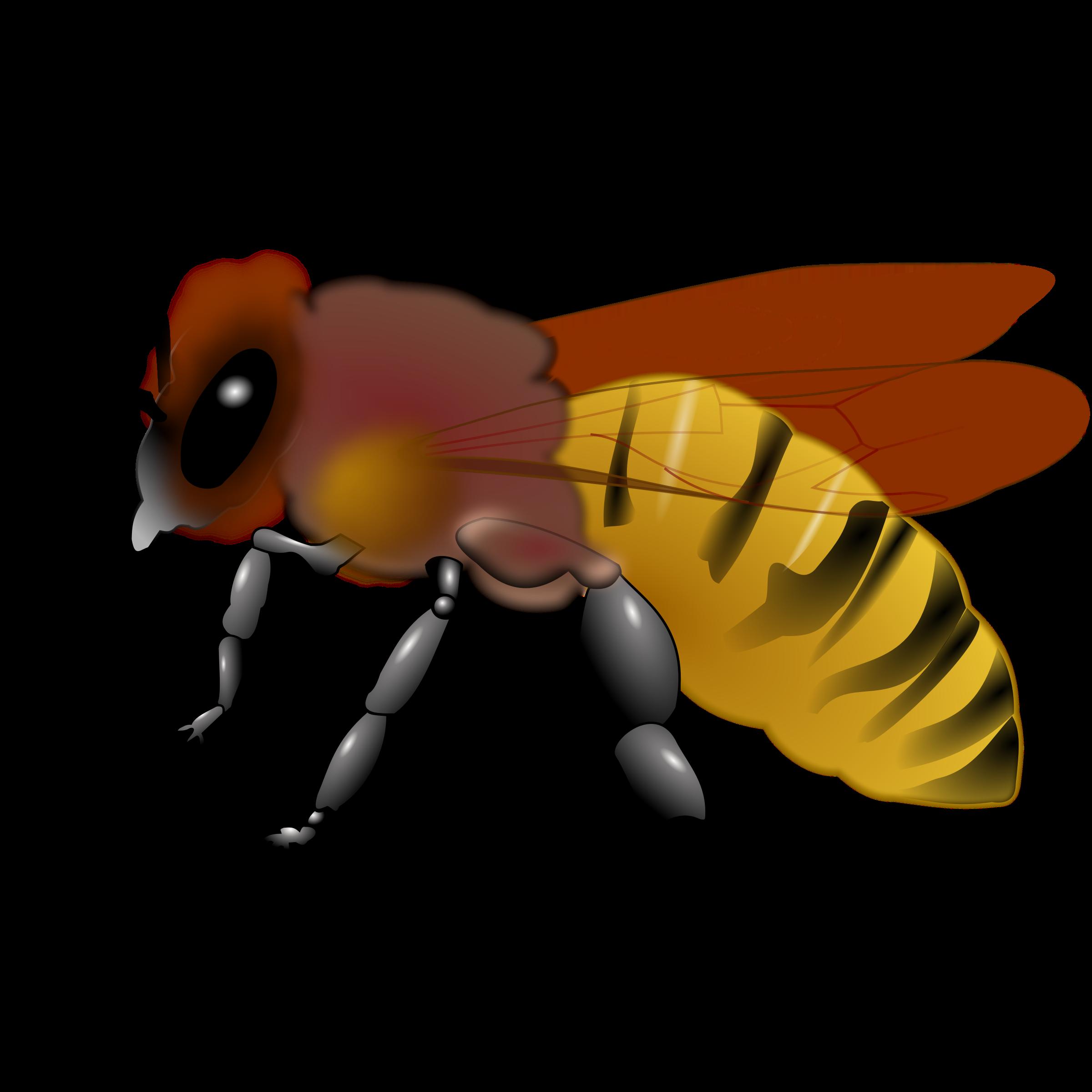 2400x2400 Honeybee Vintage Honey Bee Clipart Clipartfest