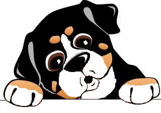 320x226 Bernese Mountain Dog Clipart