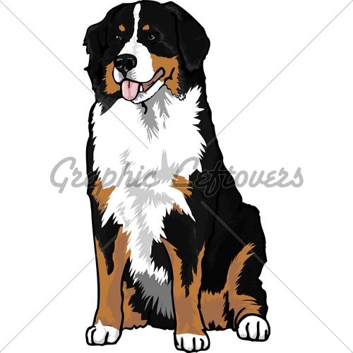 500x500 Bernese Mountain Dog Clipart