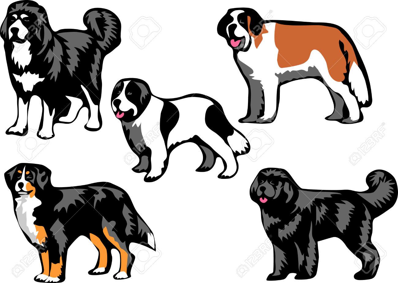 1300x924 Bernese Mountain Dog Clipart Newfoundland